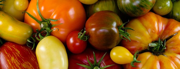 heirloom tomato-varieties tomato geeks