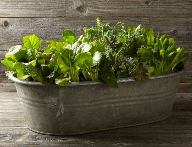 container williams-sonoma-galvanized-metal-planter-trough-gardenista