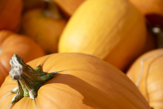 blog pumpkin danielle levy nutrition com 2