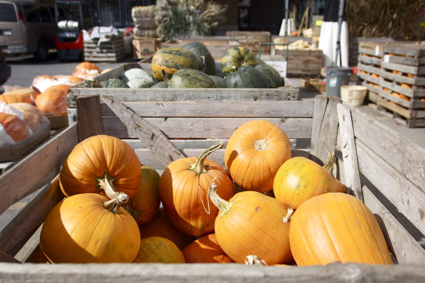 blog pumpkins danielle levy nutrition com