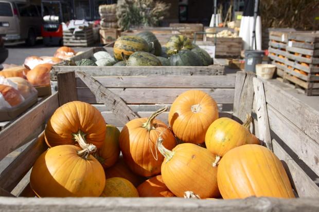 blog pumpkins danielle levy nutrition com