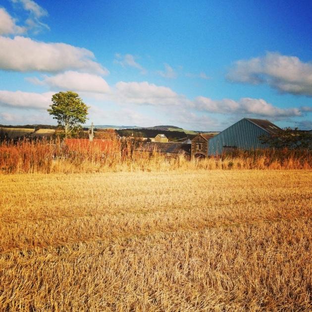 Donna aberdeen farm