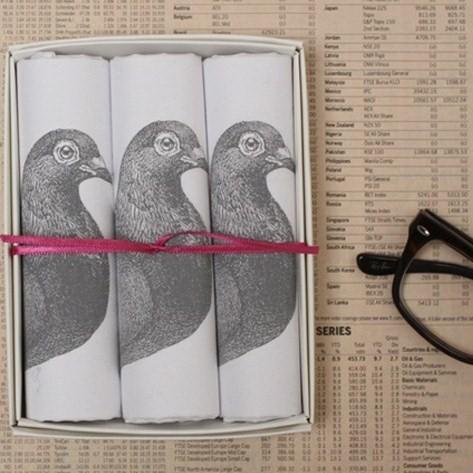 hanky box pigeon lifestyle